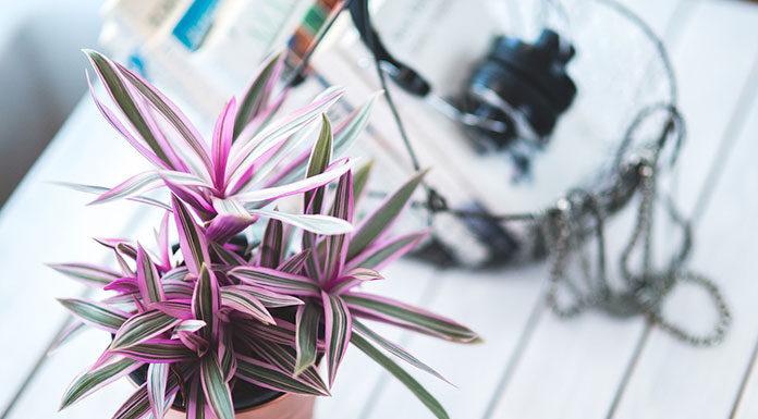 Pałeczki z nawozem do doniczki sposobem na bujny wzrost roślin