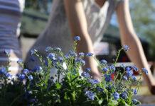 Pomysł na mały ogród
